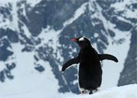 Tučniaky - obvyklí obyvatelia ostrova Crozet